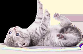 Любимец - малка котка